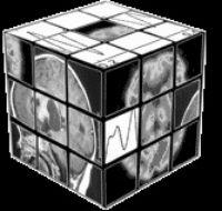 Cognitive Neuroscience Society Headshot